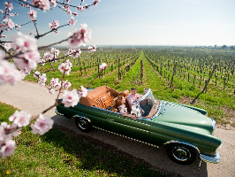 Oldtimervermietung Hochzeitsauto